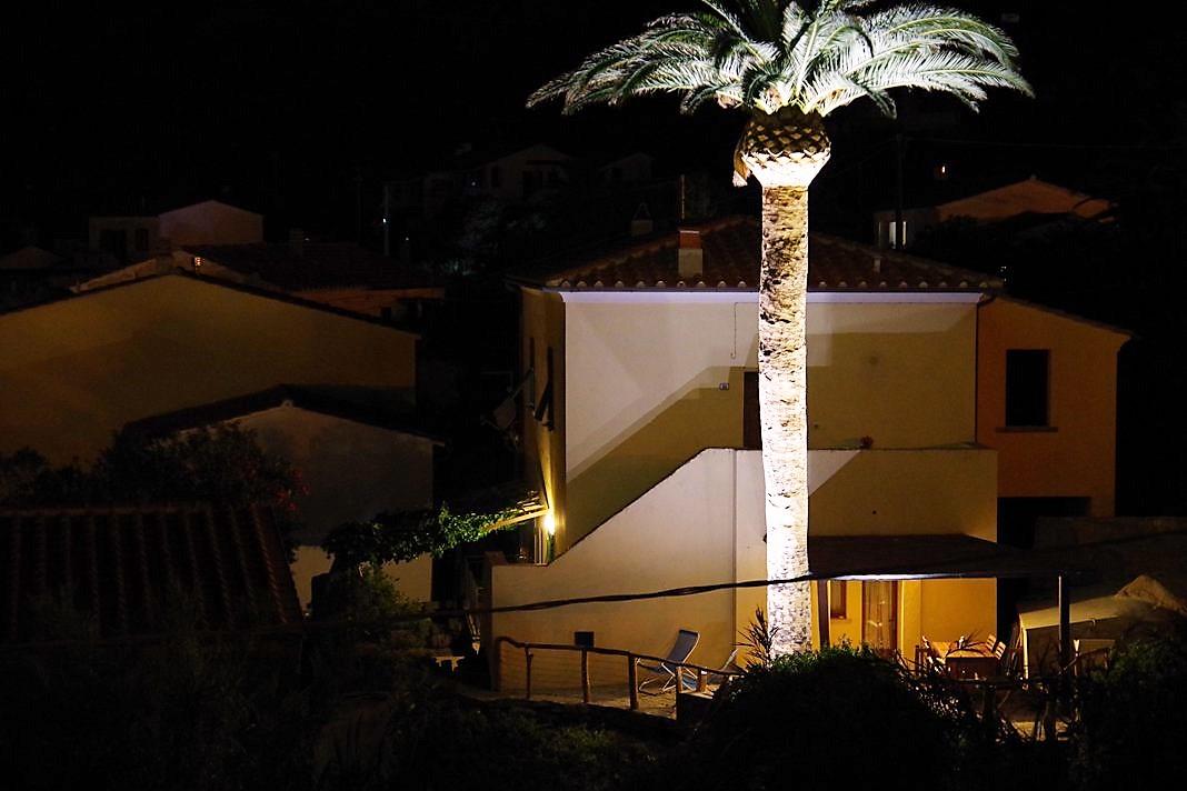 Illuminazione alberi come illuminare un albero energie sparren